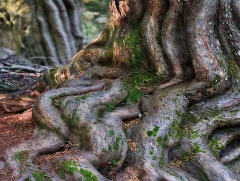 The Secret Wood