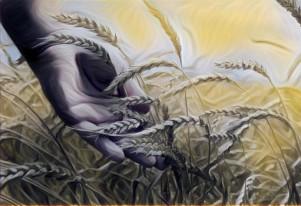 wheat19