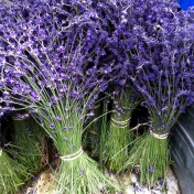 Lucky lavender