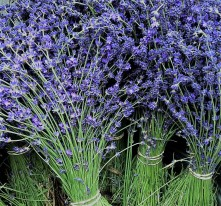 lavender-bunches4