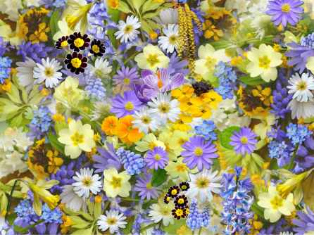 spring-flowers-flowers-collage-floral-68507.jpeg